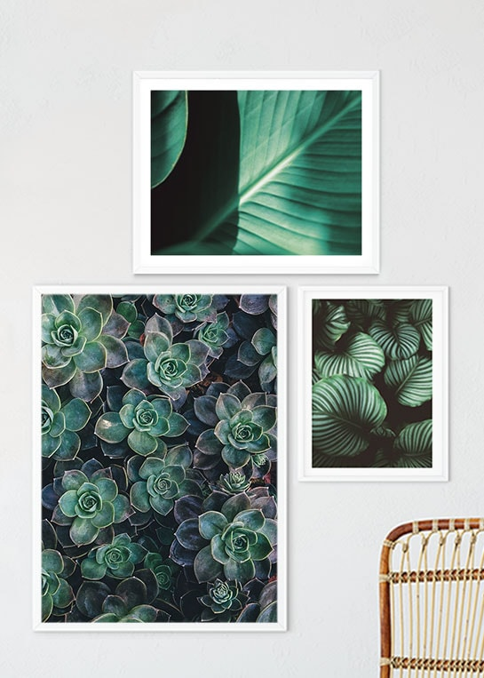 BIG GREEN LEAVES, GREEN LEAVES CLOSEUP & SUCCULENTS POSTERS