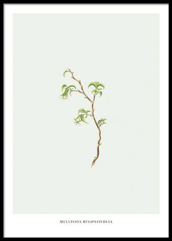 ENDANGERED PLANT POSTER