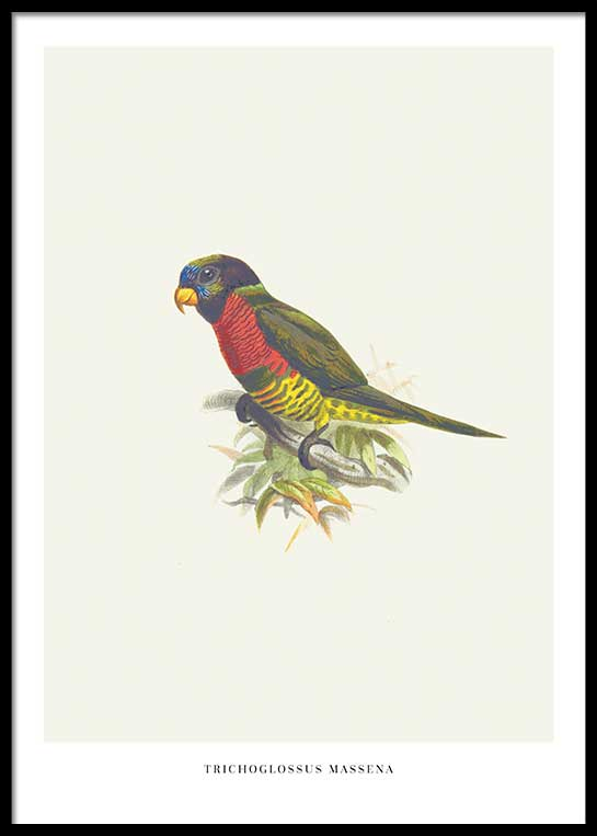 BIRDS NO. 1 POSTER
