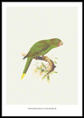 BIRDS NO. 4 POSTER