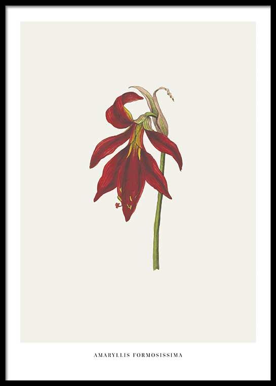 RED VINTAGE FLOWER POSTER