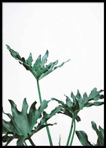 PAPAYA LEAVES POSTER