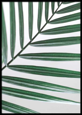 PALM LEAVES CLOSEUP POSTER