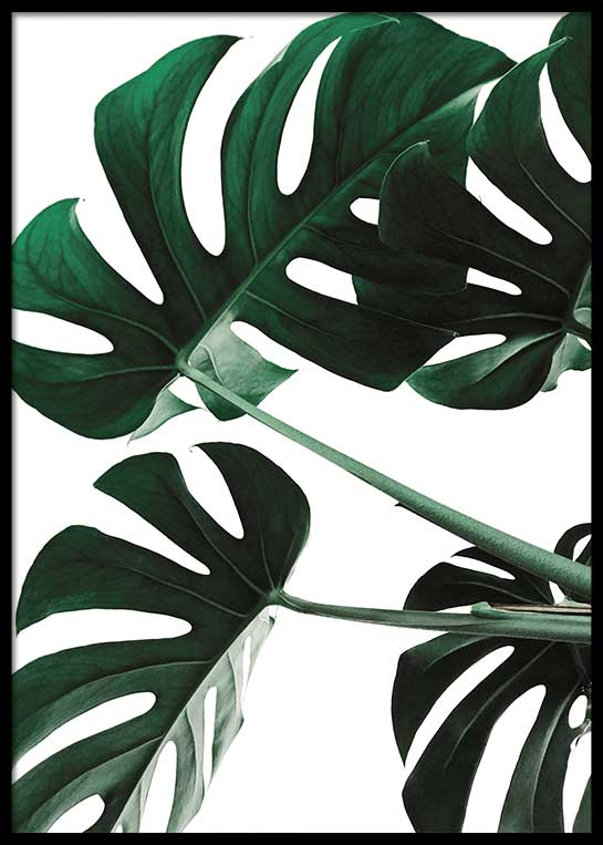 MONSTERA LEAVES NO. 3 POSTER