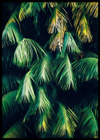 HANGING PALM LEAVES POSTER