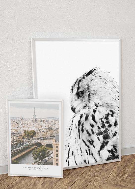 WHITE OWL & URBAN ADVENTURES POSTERS