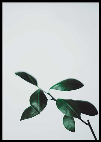 CITRUS LEAVES POSTER