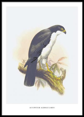 BIRDS NO. 3 POSTER