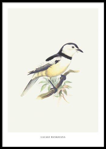 BIRDS NO. 5 POSTER