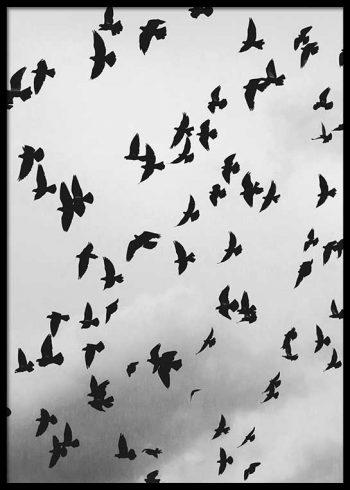 FLOCK OF BIRDS POSTER