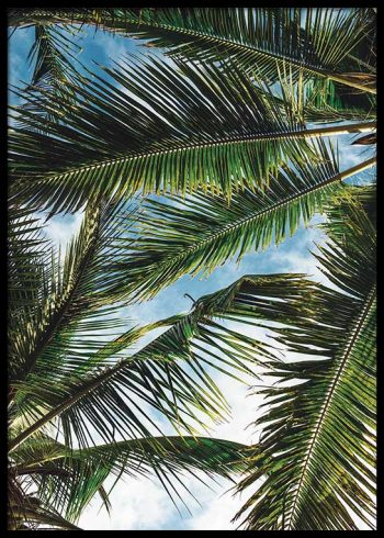 PALMS OVERHEAD POSTER