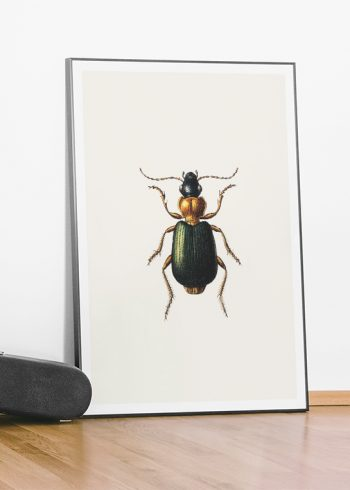 VINTAGE BUGS NO. 2 POSTER
