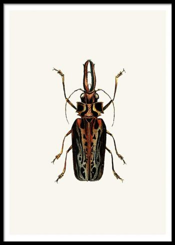 VINTAGE BUGS NO. 3 POSTER