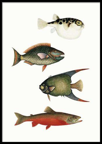 VINTAGE FISH POSTER