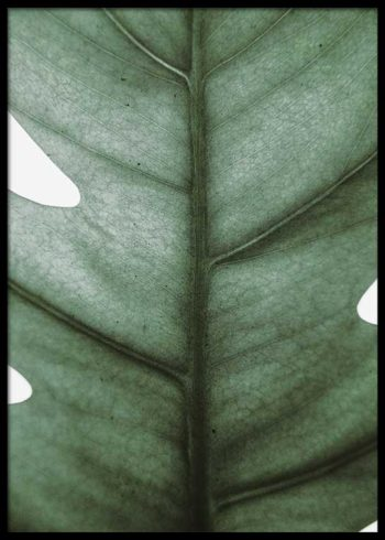 MONSTERA CLOSEUP POSTER