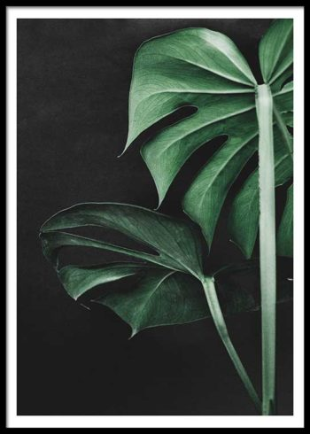 MONSTERA ON BLACK POSTER